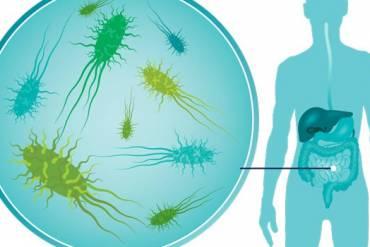 Ποιός ο ρόλος της διατροφής στη διαμόρφωση της εντερικής μικροχλωρίδας;